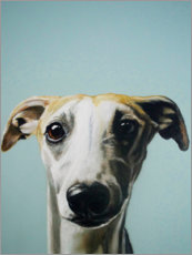 Gallery Print  Whippet Portrait - Victoria Coleman