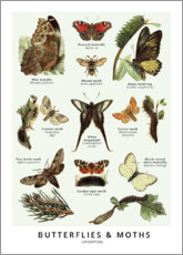 Premium-Poster  Schmetterlinge (Englisch) - Wunderkammer Collection