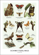 Gallery Print  Schmetterlinge - Wunderkammer Collection