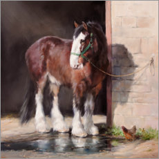 Gallery Print  Shire Horse - Jacqueline Stanhope