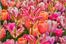 Gallery Print  Tulpen I - Holice Looney