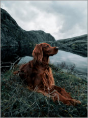 Premium-Poster  Die Landschaft genießen - The secret life of Troja