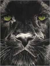 Gallery Print  Panthergesicht - Rose Corcoran