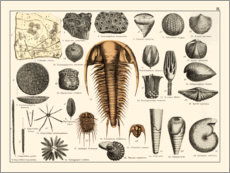 Gallery Print  Fossilien II - Wunderkammer Collection