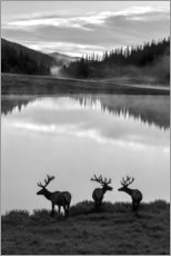 Premium-Poster  Rocky-Mountain-Nationalpark - Jaynes Gallery