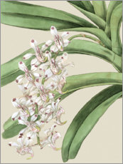 Premium-Poster Orchideenblüte I