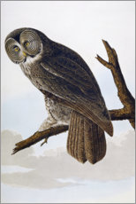 Wandaufkleber  Great Cinereous Owl, from 'The Birds of America' - John James Audubon