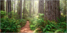Gallery Print  Redwoods Magic - Michael Breitung