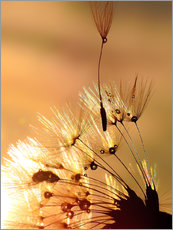 Wandsticker Pusteblume golden Touch