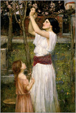 Gallery Print  Pflücken von Mandelblüten - John William Waterhouse