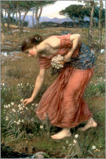 Gallery Print  Narzisse - John William Waterhouse