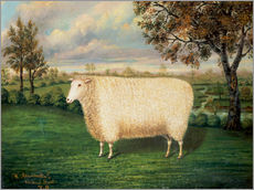 Wandaufkleber  A Prize Sheep of the Old Lincoln Breed, 1835 - W. Adamson
