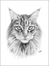 Gallery Print  Maine Coon Katze - Christian Klute