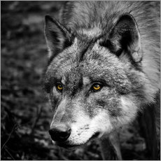 Gallery Print  Wolf - Stephanie Wittenburg