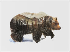 Arctic Grizzly Bear