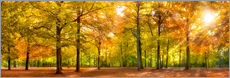 Colorful autumn forest in sunlight