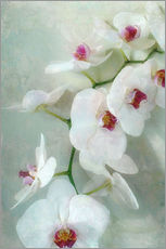 Composition of a white orchid with transparent texture