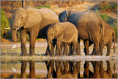 Elephants at a river, Africa wildlife