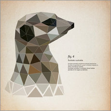 fig4 Polygon meerkat  square