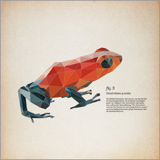 fig5 polygon frog square