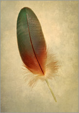 Green parrot feather