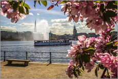 Cherry on the Alster in Hamburg for Spring
