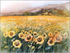 Sunflower field in the Luberon, Provence