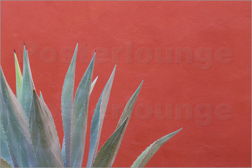 Don Paulson - Agave vor bunter Wand