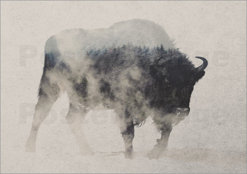 Andreas Lie - Bison im Nebel