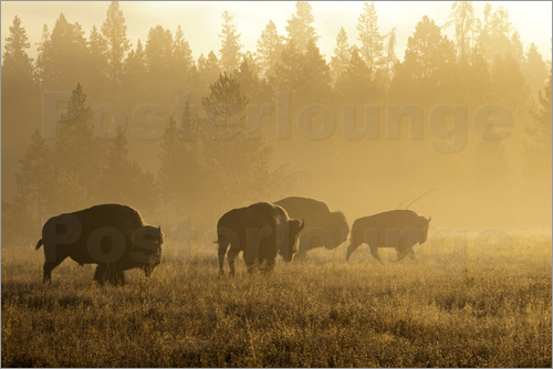 Patrick J. Wall - Bisons im Nebel