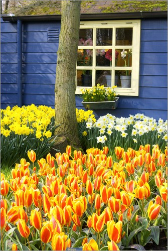 jim engelbrecht blumen im garten des keukenhof in lisse poster online bestellen posterlounge. Black Bedroom Furniture Sets. Home Design Ideas