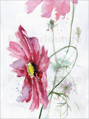verbrugge watercolor cosmos blume aquarell poster online. Black Bedroom Furniture Sets. Home Design Ideas