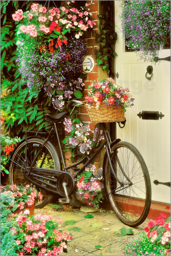 simon kayne fahrrad mit blumen poster online bestellen posterlounge. Black Bedroom Furniture Sets. Home Design Ideas