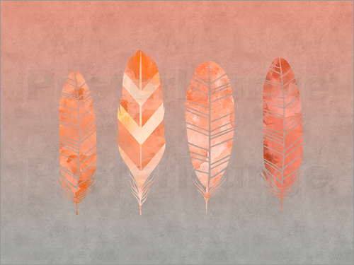Andrea Haase - Feathers