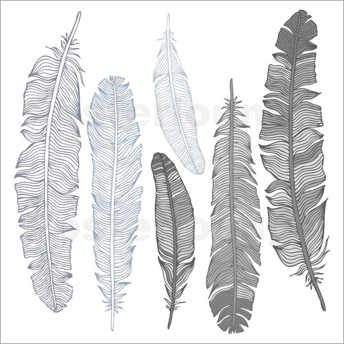 Poster Feathers on white