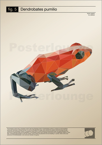 Poster fig5 Polygonfrosch Poster