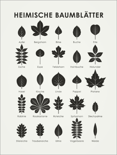 Poster European Tree Leaves