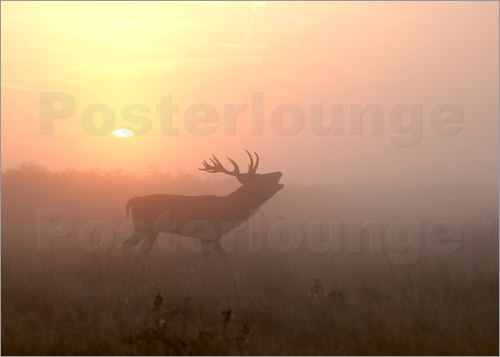 Poster Misty morning stag
