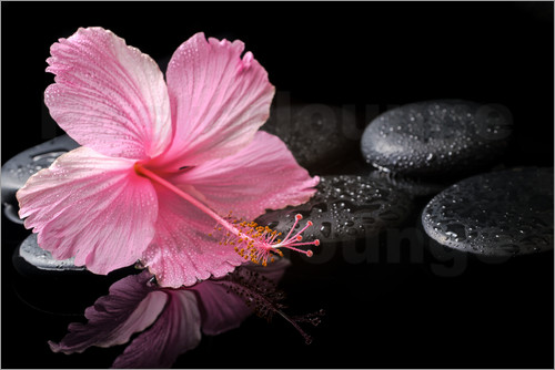 Hot Stone Massage mit Hibiskus