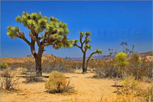 fotoping - Joshua Tree
