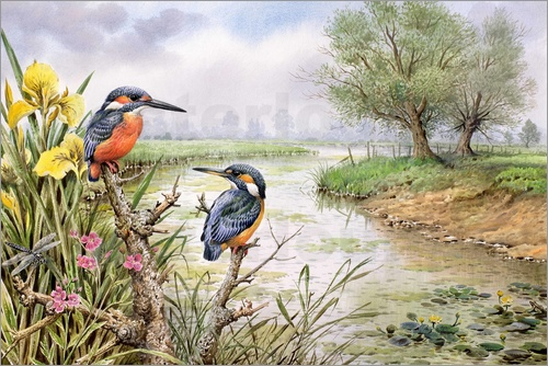 Carl Donner - Kingfishers on the Riverbank