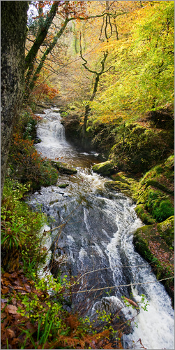 Keith Wheeler - Lynmouth Fluss mit Wald