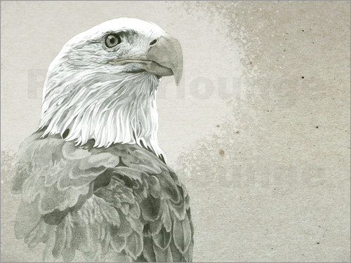 Poster Bald Eagle Majestic