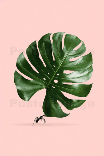 Poster MONSTERA AMEISE