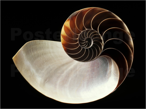 gilles mermet nautilus muschel poster online bestellen posterlounge. Black Bedroom Furniture Sets. Home Design Ideas