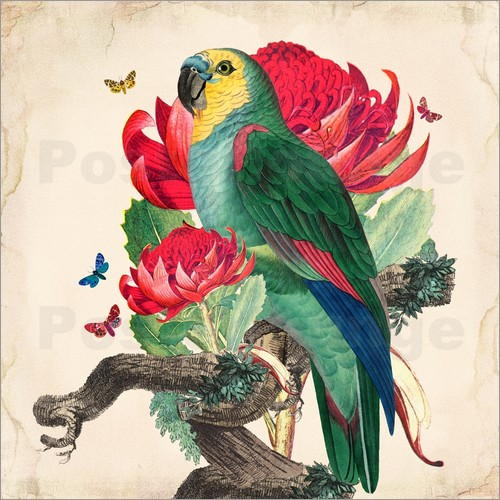 Mandy Reinmuth - Oh My Parrot X