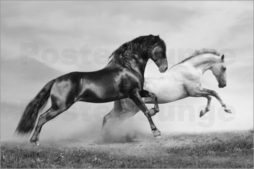 black beauty spielen