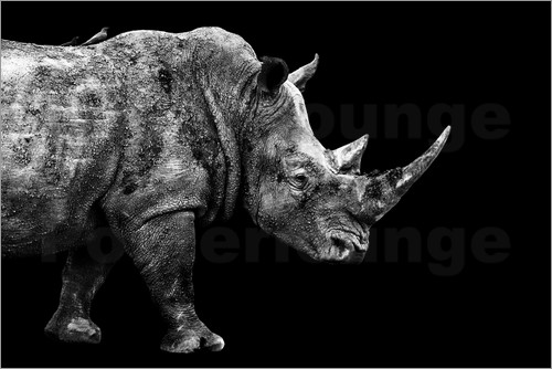 Philippe HUGONNARD - Safari Profil Collection - Rhino Black Edition