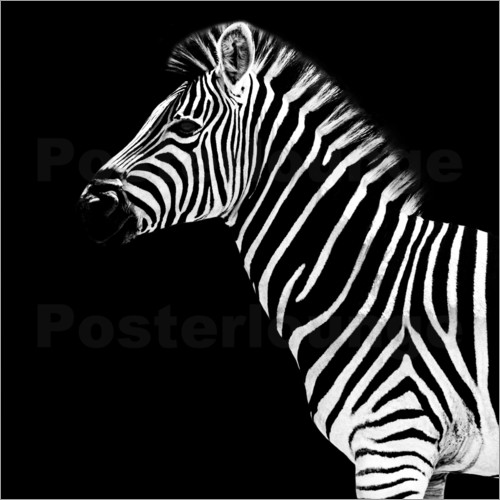 Philippe HUGONNARD - Safari Profil Collection - Zebra Black Edition II
