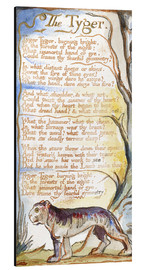 Alu-Dibond  Der Tiger - William Blake